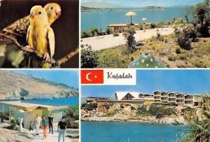 Turkey Kusadasi Birds Plage Promenade Beach Panorama