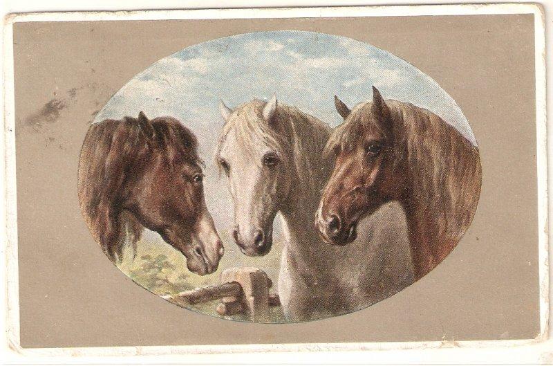 Three horses. Heads Nice vintage English postcard