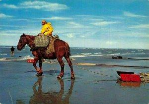 Belgium Zee strand Beach Fisherman Horse Postcard
