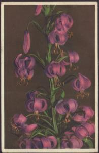 Purple Martagon Lily Postcard