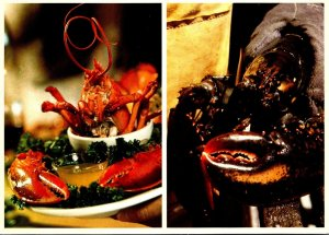 Maine Lobster Fresh From The Sea A Delight For The Palate