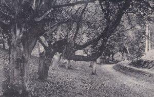 Bent Tree Lions Mouth Cromer Norfolk Antique Postcard