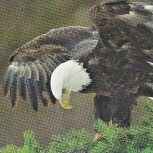 1996 Bald Eagle National Audubon Society Printed in USA Robert Winslow