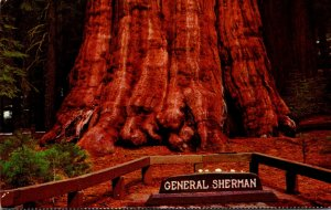 California Sequoia National Park General Sherman Tree Oldest Living Thing Kno...