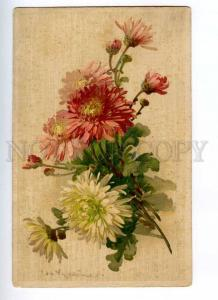 188117 DAHLIA ASTER Flowers by C. KLEIN Vintage GOM Russia PC