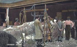 Weighing cotton Black, Blacks Postcard Post Card  Weighing cotton