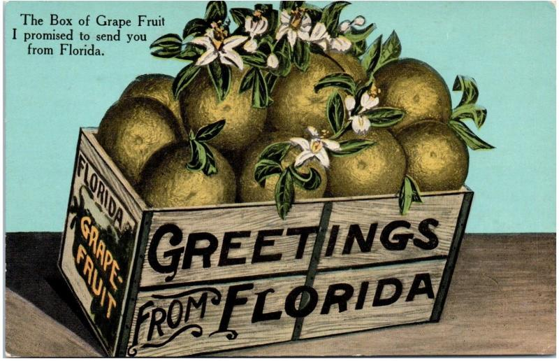 Postcard Greetings From Florida The Box Of Grapefruit I Promised To Send You A33