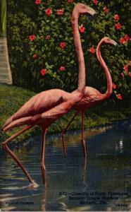 Birds Flamingos At Sarasota Jungle Gardens Florida Curteich