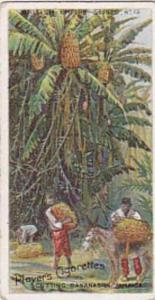 Player Vintage Cigarette Card British Empire Series No 12 Cutting Bananas In ...