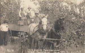 3 RPs : Princeton , Illinois , 1908 ; W.T. Anson's Pear Orchard