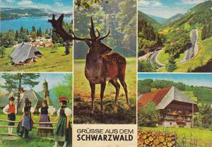 Greetings Gruesse Aus Dem Schwarzwald Germany
