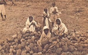 Fiji Oceania Gathering Pineapples in Fiji Raphael Tuck Postcard