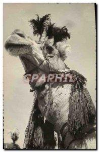 Old Postcard Dromedary Camel (TOILEE map)