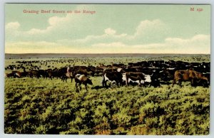 Western~Grazing Beef Steers on the Range~Chas E Morris Chinook MT M232~1908