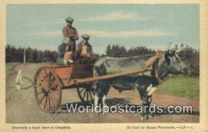 Gaspe Peninsula Canada, du Canada Charrette a baeuf, Gaspesian Ox Cart  Charr...