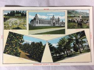 Early 1900s Riverside County, CA Oranges Dates Dairy Poultry Postcard