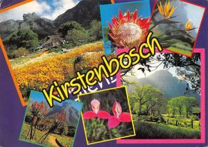 South Africa National Botanic Gardens Kirstenbosch Die Nasionale Botaniese Tuin