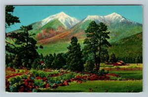 Flagstaff AZ- Arizona, San Francisco Peaks, Pines, Mountains, Chrome Postcard