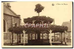 Old Postcard L & # 39Arbre From Macon