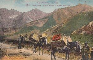 Les Pyrenees , Transport a dos De Mulet En Haute Montagns , France , 00-10s