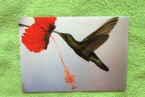 Hummingbird Avian Postcard Nature's Grandeur Le Colibri With Flower