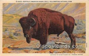 Yellowstone National Park, USA Buffalo, American Bison Postcard Post Card Yel...