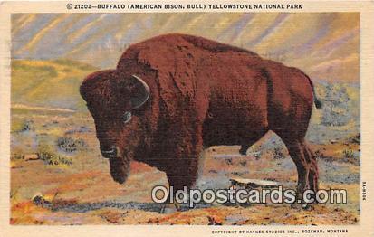 Yellowstone National Park, USA Buffalo, American Bison Postcard Post Card Yel...