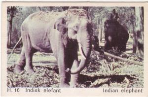 Trade Card Dandy Gum Wild Animals H 16 Indian Elephant
