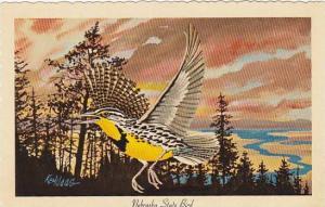 Nebraska State Bird Western Meadowlark