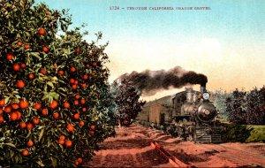 California Train Passing Through California Orange Grove