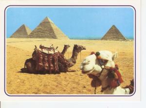 Postal 027827 : Giza-The Pyramids, Egypt