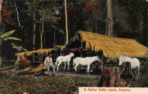 A Native Cattle Ranch, Panama, Early Postcard, Unused