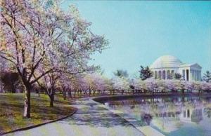 Washington D C Jefferson Memorial With Cherry Blossoms