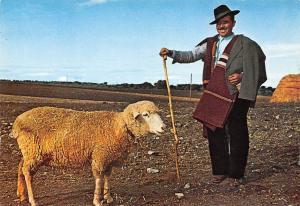 Portugal Alemtejo Pastor Shepherd Sheep