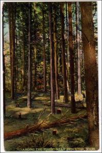 Among the Pines near Brockton MA