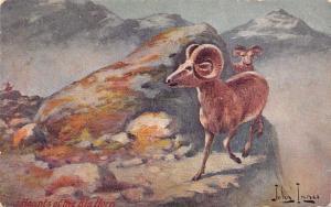 John Innes~Cowboy Western Artist~Haunts of the Big Horn~Mountain Goat Ram~1908
