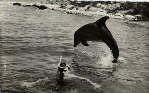 American TV Series FLIPPER Actor Tommy Norden, Dolphin (1960s) Postcard