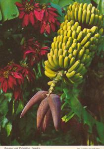 Jamaica Bananas and Poinsettia