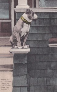 Jimmie Jocx American Bull Dog sitting in front of house, WHITE RIVER JUNCTI...