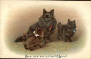 Dogs Poemranians? A&MB #562 French Hyeres c1910 Postcard