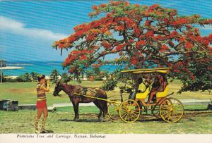 Poinciana Tree & Carriage , NASSAU , Bahamas , 60-80s