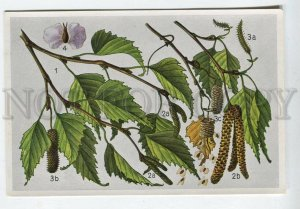 428062 Flower Betula verrucosa Vintage Sammelwerk Tobacco Card w/ ADVERTISING