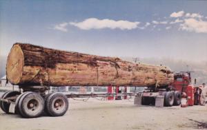 Logging Truck , Tons of Toothpicks, Blue Skies Above, Redwood Highway, Califo...