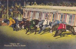 They're Off Greyhound Racing In Florida Curteich