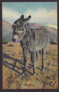 Rags,Donkey Postcard