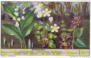 Liebig Trade Card S1568 Forest Flowers No 2 Lelietje-der-dalen Klaverzuring &...