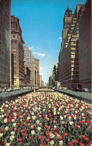 New York City~Park Avenue in Spring~Large Tulip Beds in Center~Classic Cars~'50s