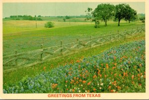 Texas Greetings With State Flower Bluebonnets Mixed With Wild Flowers