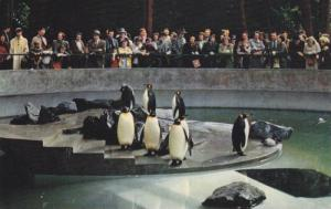 Penguins in Stanley Park Zoo,  Vancouver,  B.C.,  Canada,  40-60s