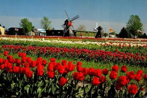 Michigan Holland Veldheer's Tulip Farm